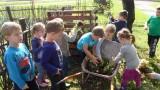 …ocvale begonije završit će u komposteru